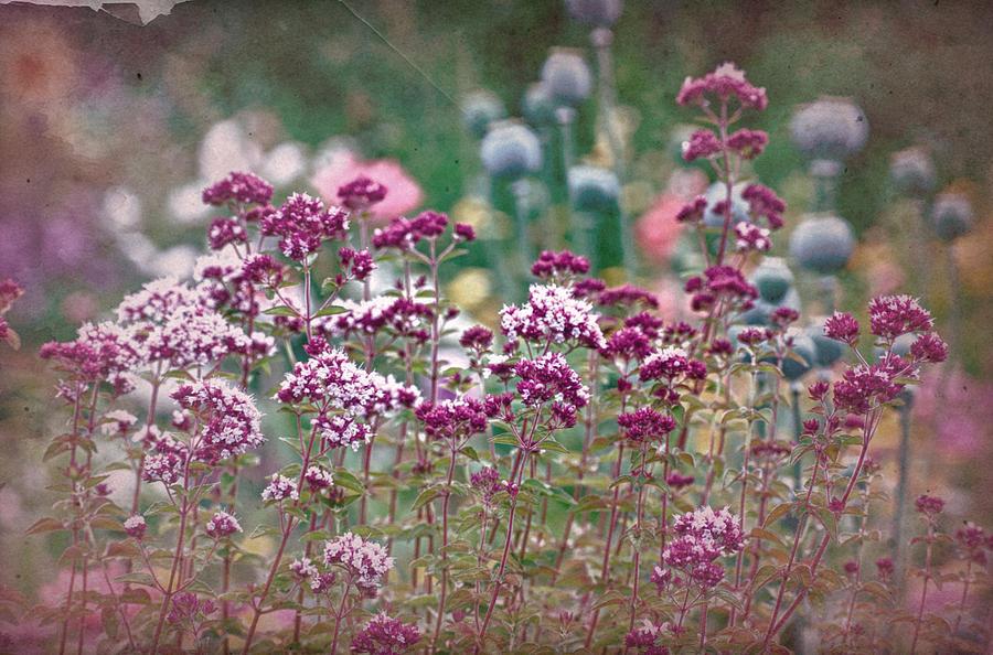 vintage-flowers-richard-cummings